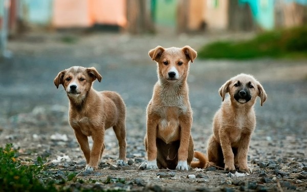 portrait-of-three-dogs-on-dirt-road
