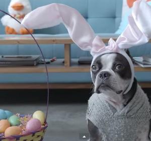 funny-easter-dog